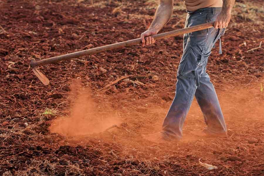 Homem Cultivando Lavoura